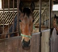 tn_konie Stajnia Mirabell (13)