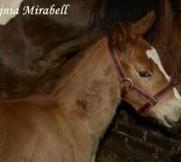 tn_konie Stajnia Mirabell (16)