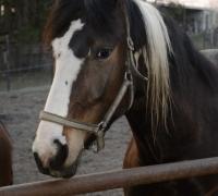 tn_konie Stajnia Mirabell (17)