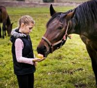 tn_konie Stajnia Mirabell (24)