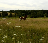 tn_konie Stajnia Mirabell (8)
