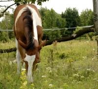 tn_konie Stajnia Mirabell (9)